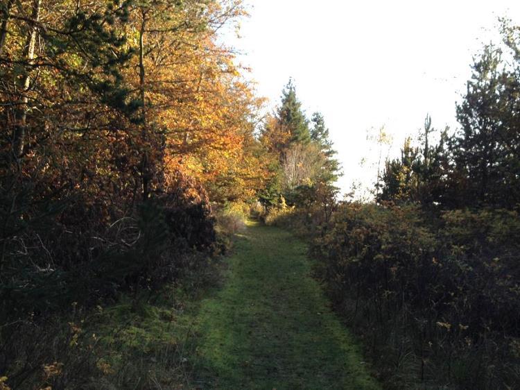 025, B. Nielsensvej 4, Sillerslevøre, Øster Assels